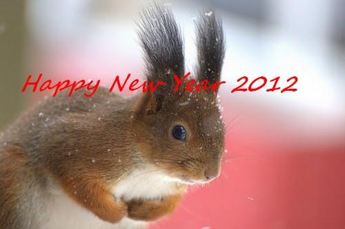 AUGURI DI UN BUON ANNO 2012 A TUTTI dans ANNO PAOLINO Squirrel-In-The-Snow-Mustamae-Estonia-SunCat31